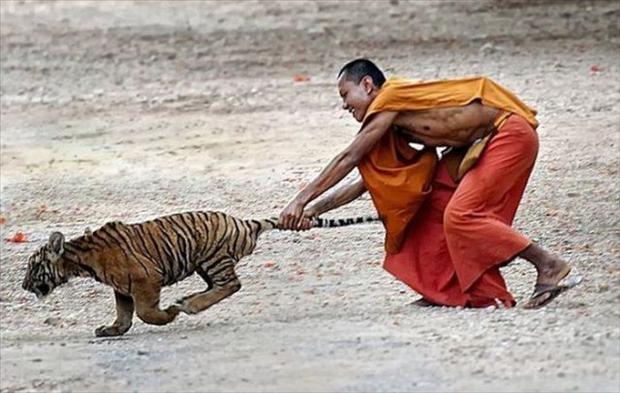 Chiêu bắt hổ của võ sư Tây Tạng