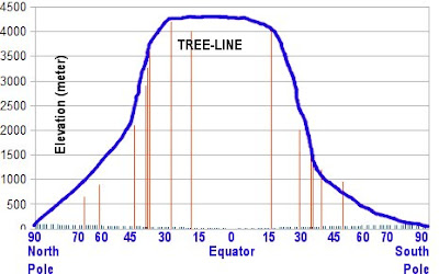 what elevation is the tree line