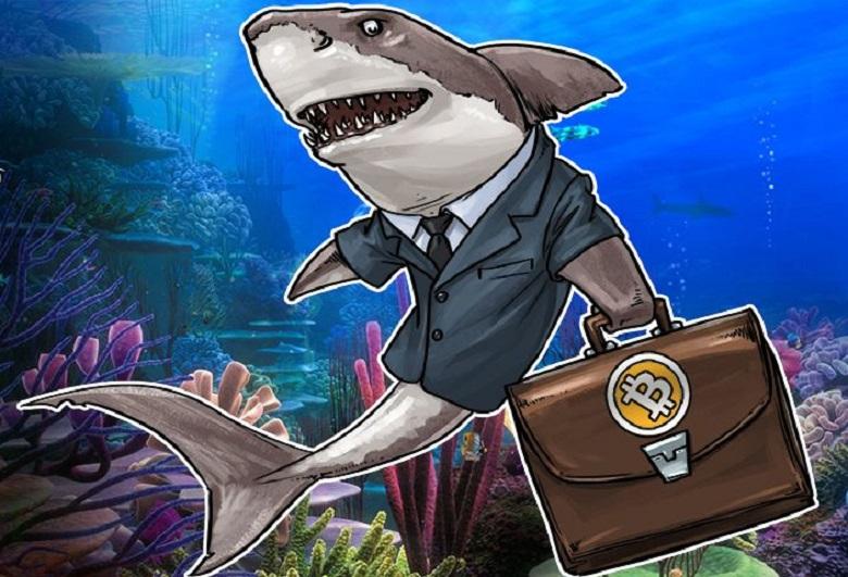 Cá mập gom coin khi nào
