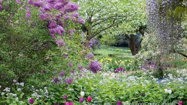Un bouquet de brezo de invierno y una fría mudanza a la primavera