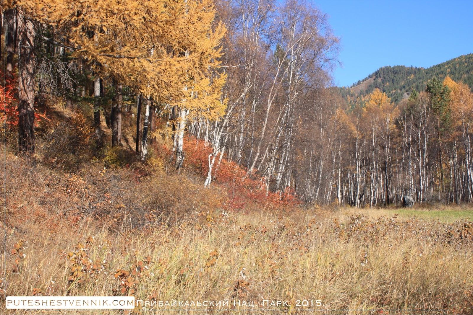 На опушке осеннего леса
