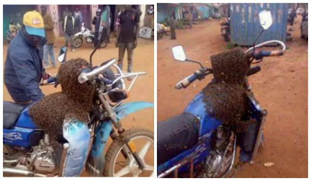 Swarm of bees recover stolen motorbike, attack thief in Kenya