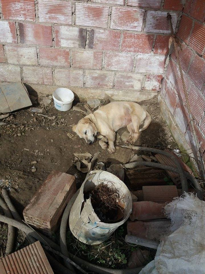Ιωάννινα :Καταγγελία στον εισαγγελέα για  αλυσοδεμένη επι 18 χρόνια  σκυλίτσα..