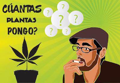 Cuántas plantas pongo en mi armario de cultivo de marihuana?