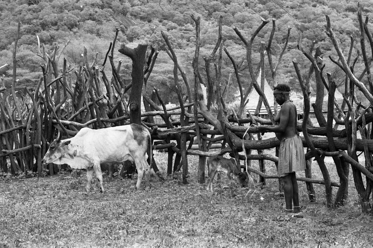The Larim Boya Of South Sudan Part 8 Pitt Rivers Museum