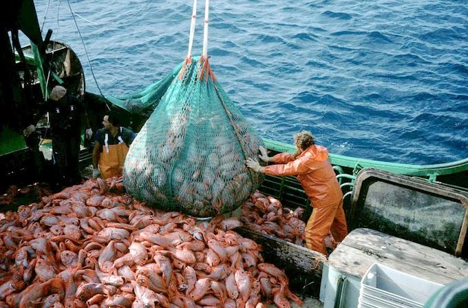 Una encuesta revela la existencia de un apoyo público abrumador a la prohibición de la pesca de especies amenazadas