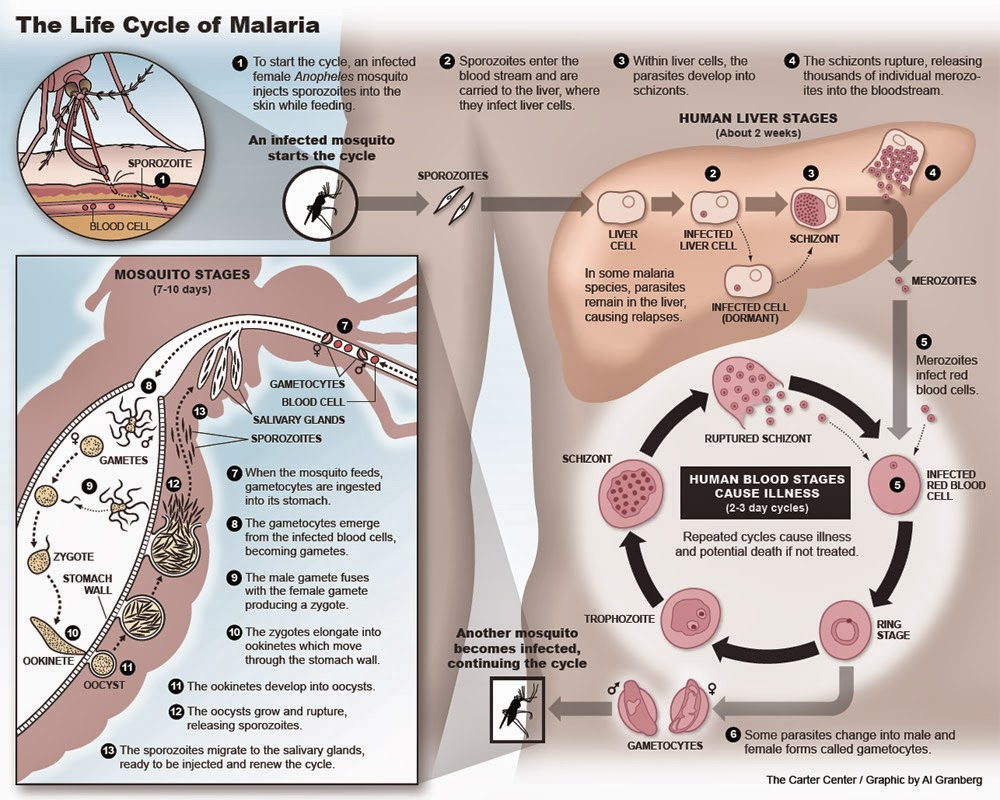 hight resolution of diagnosis of malaria
