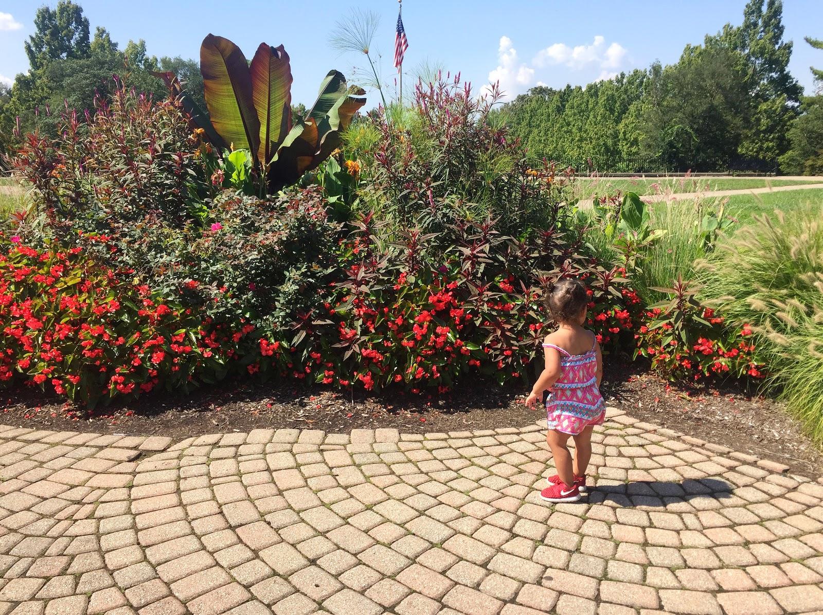 Golden Skies: Walks With Ida : Ault Park