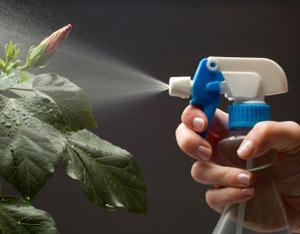 eliminar plagas caseras
