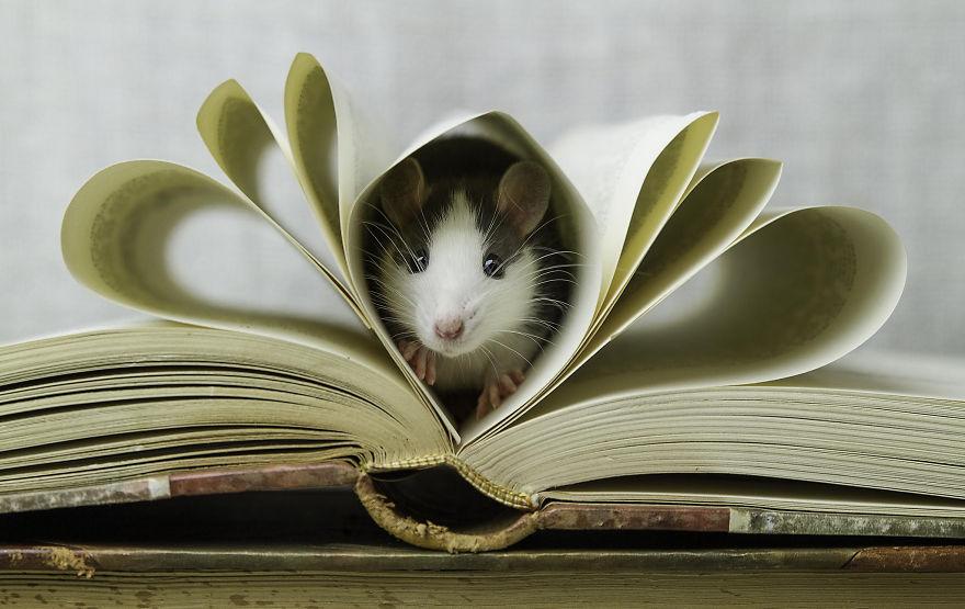 cute-pet-rats-5