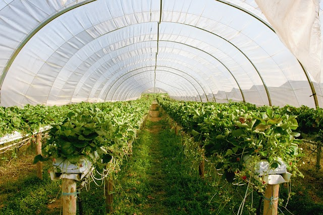 9 Basic Tips for Building a Greenhouse