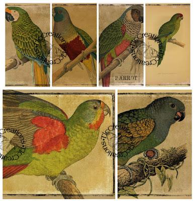 """""""Parrot Paradise"""""""