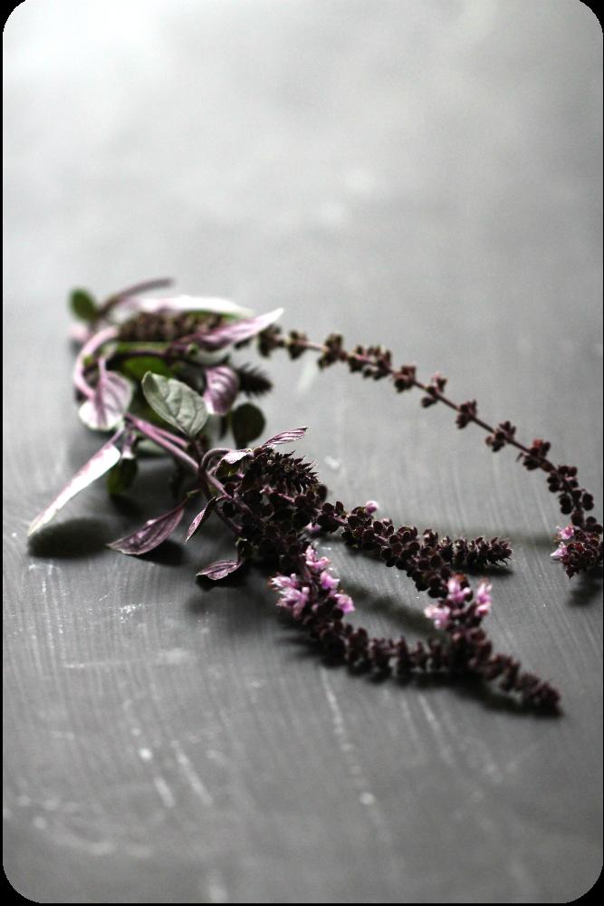 Aus dem Kräutergarten: Basilikumzweig mit Blüte African Blue | Arthurs Tochter Kocht von Astrid Paul