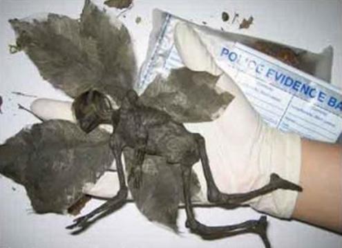 Ditemukan Binatang Aneh Mirip Manusia Juga Peri