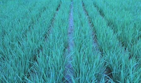Prinsip Utama Pertanian organik