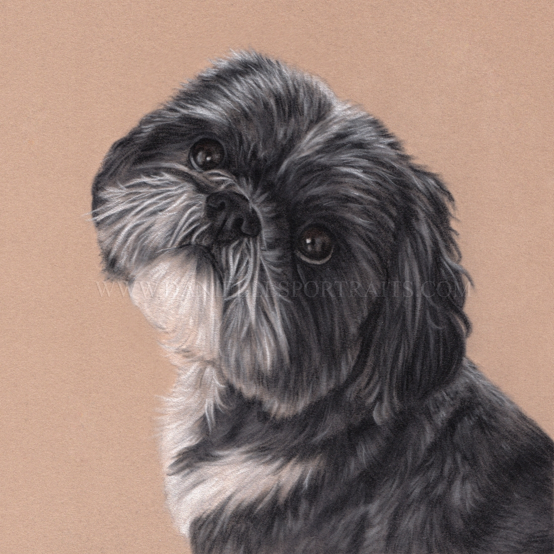 07-Bailey-Danielle-Fisher-Realistic-Pet-and-Wildlife-Portraits-www-designstack-co