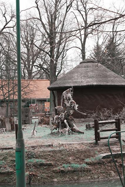 zoo wrocław opinie