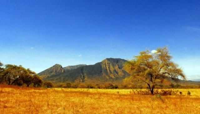 Jalan-Jalan Ke Taman Nasional Baluran Menikmati Nuansa Afrika Di Pulau Jawa
