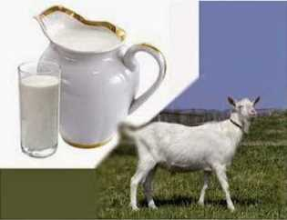 Goat milk benefits for health