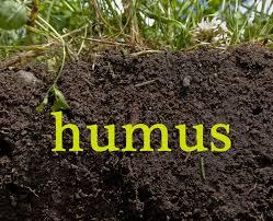 Image result for lombricompuesto humus