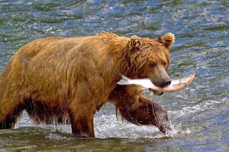 Arti Mimpi Beruang