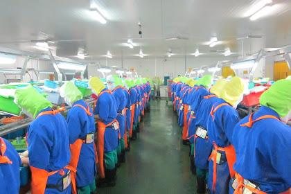 Lowongan Kerja Staff Produksi