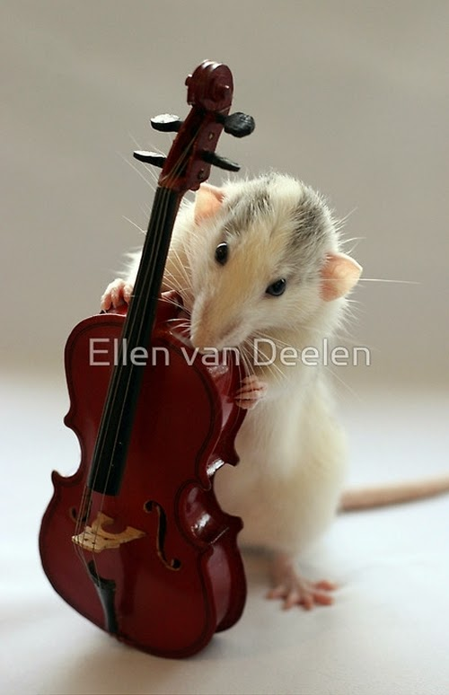 08-The-Cello-Player-Musical-Dumbo-Rat-Ellen-Van-Deelen-www-designstack-co