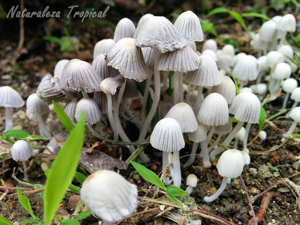 Naturaleza tropical los hongos reino fungi - Tipos de hongos en la pared ...
