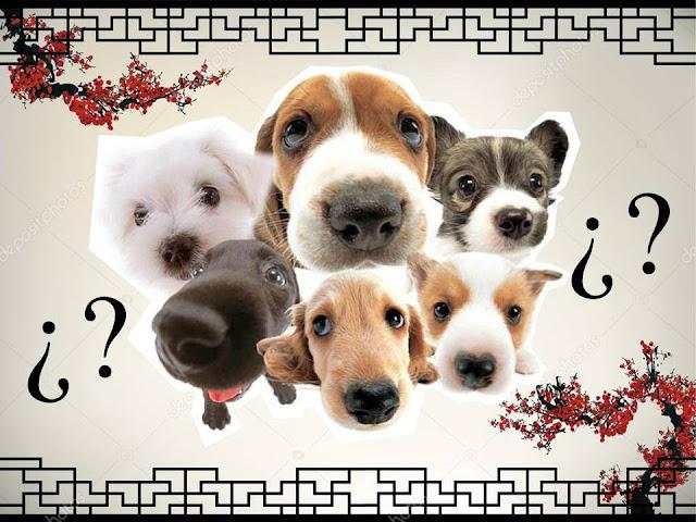 elegir un nombre para perro chino