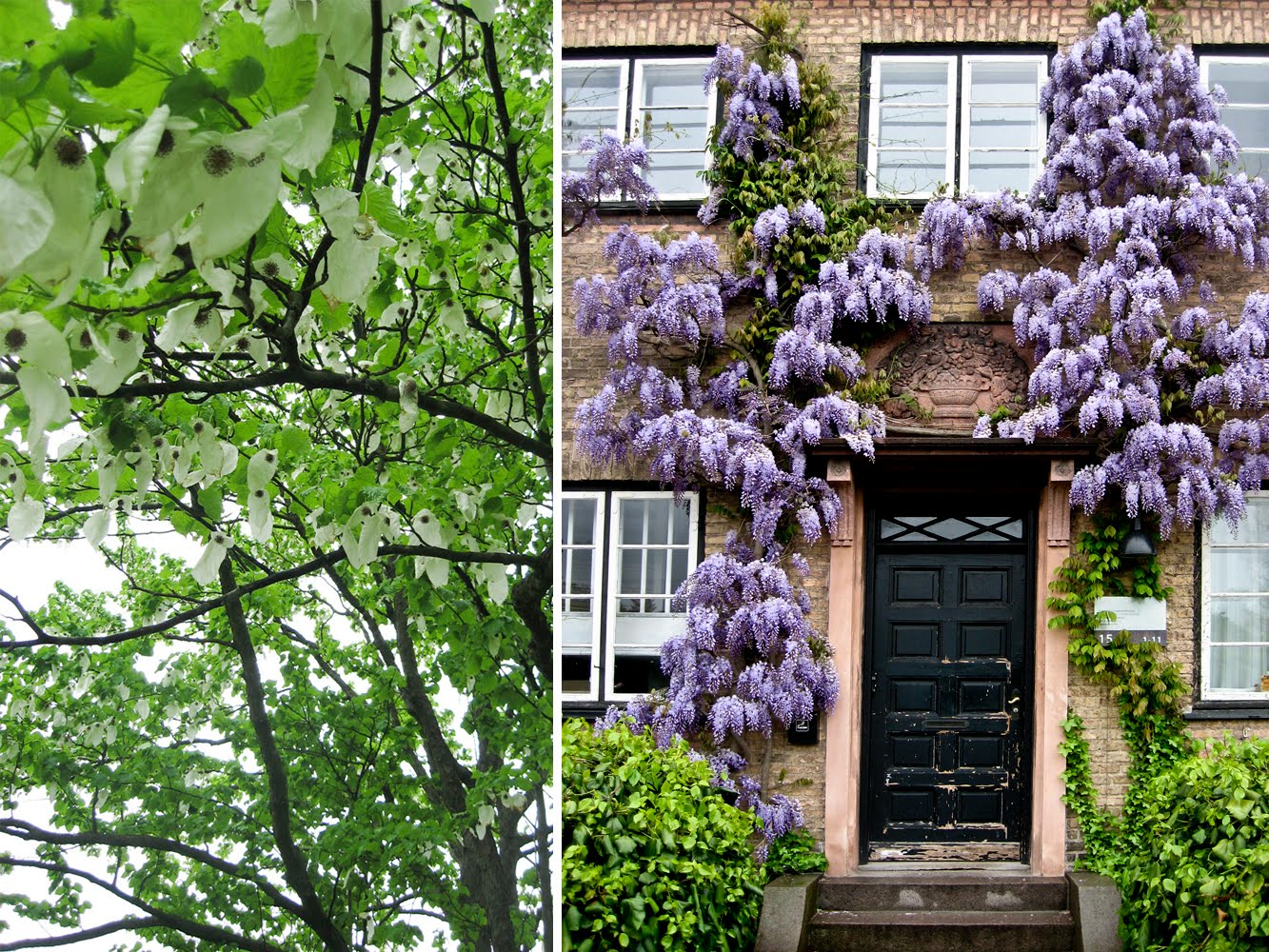 I haven hos Evigglade ♥ : En Romantisk Have - inde midt i byen?