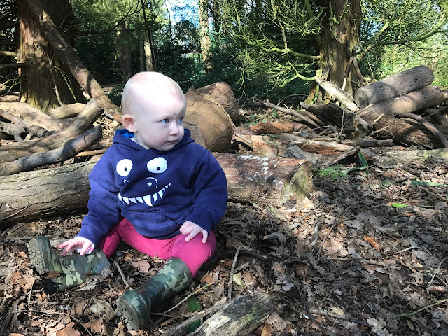 A 14 month old baby sitting on the forest floor in a blue monster hoody, surrounded by cut wood