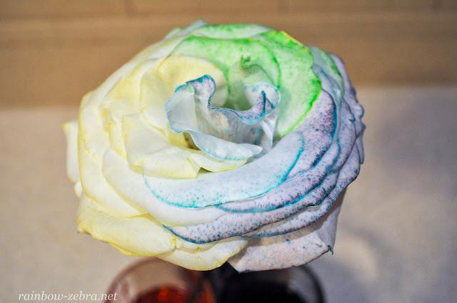Смешение цветов в лепестках