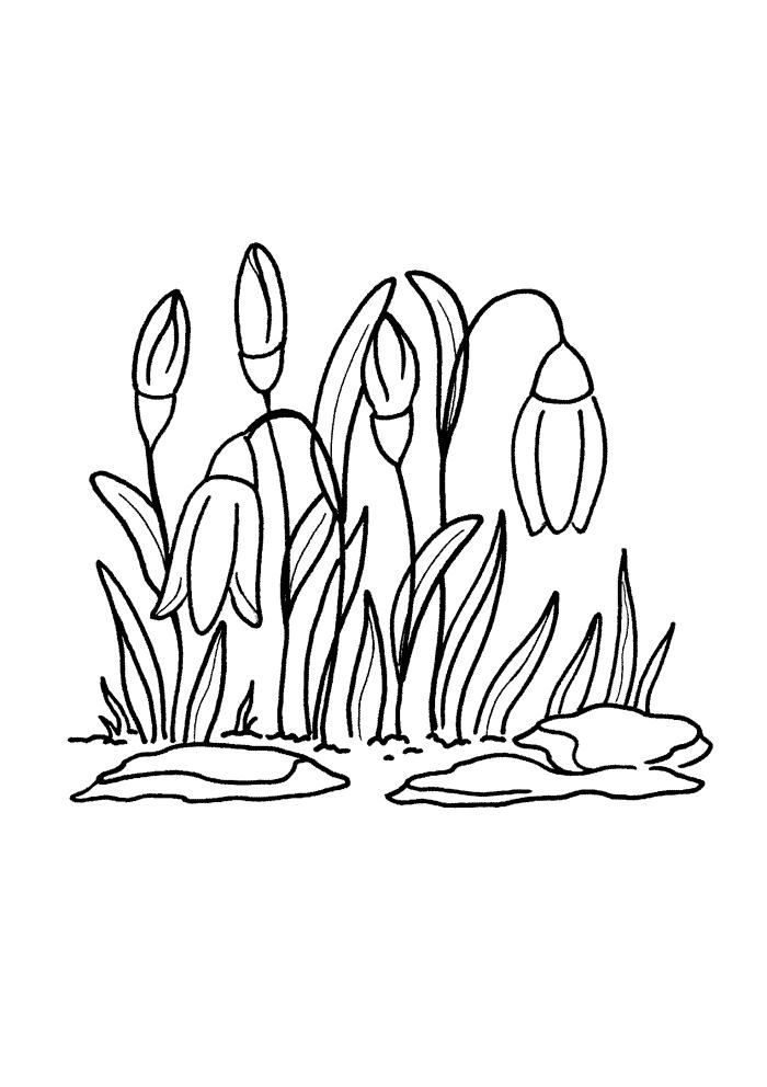 Раскраски деткам: Расраски весна - подснежники