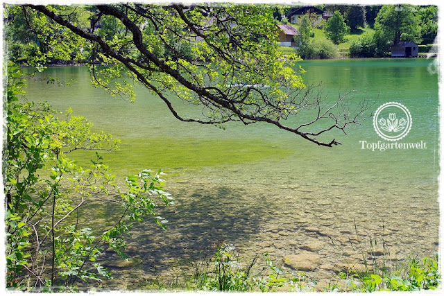 Gartenblog Topfgartenwelt Fiat 500 Oldtimer: Mondsee im Mai