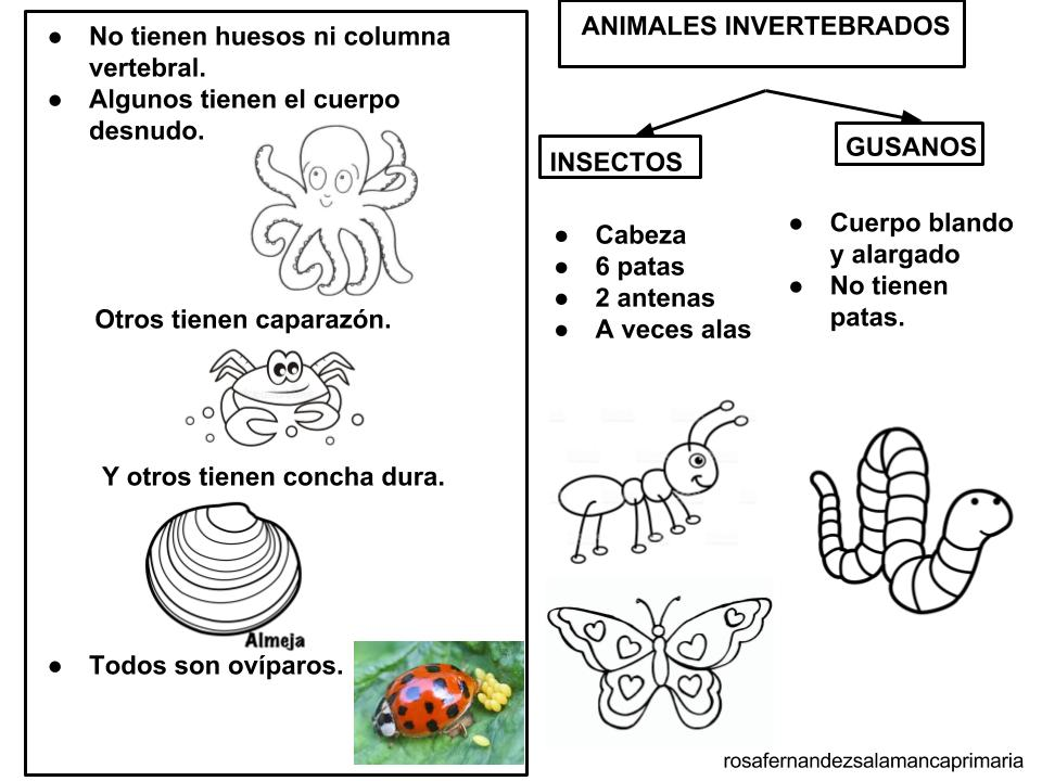 Dibujos Para Colorear De Animales Invertebrados Y Vertebrados