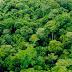 Máquina do Google monitora o desmatamento da Amazônia