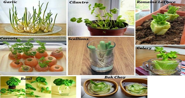 8 VEGETABLES THAT YOU BUY ONCE AND REGROW FOREVER ! COMPLETE GUIDE HOW TO GROW THEM