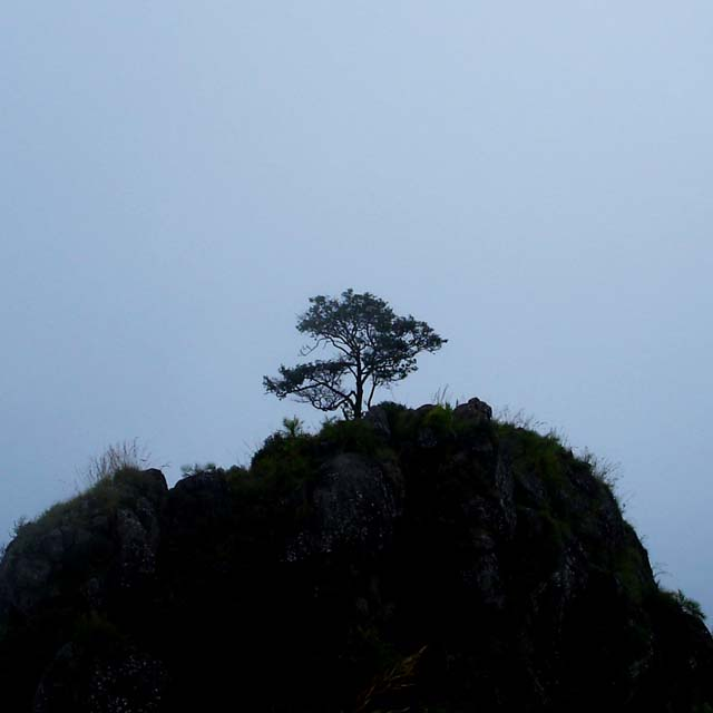 tree hills nilgiris coonoor ooty
