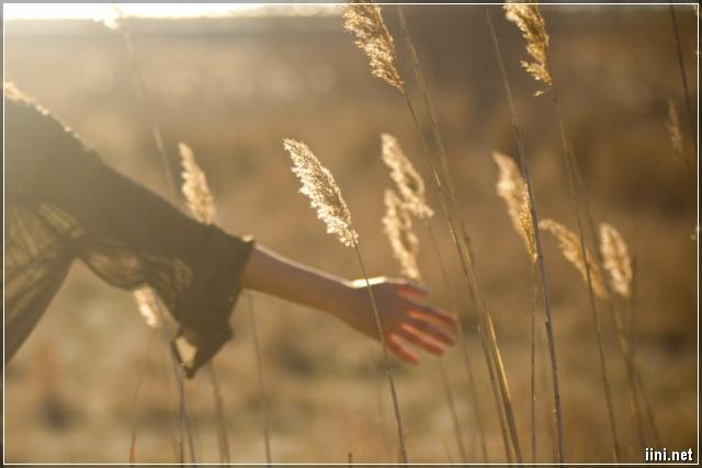ảnh bàn tay cô gái đùa giỡn với cỏ lau