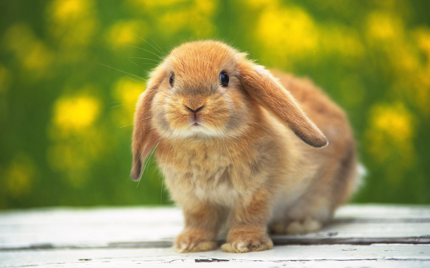 Foto Cute Bunny Rabbit