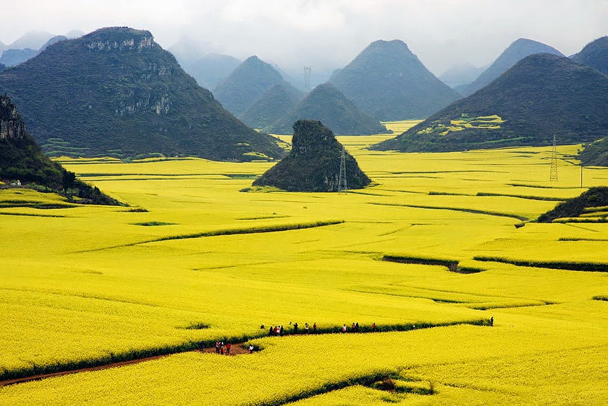 #11. The Canola Flower Fields in China - 19 Secret Travel Destinations You Never Knew Existed… Almost Nobody Knows About #17.