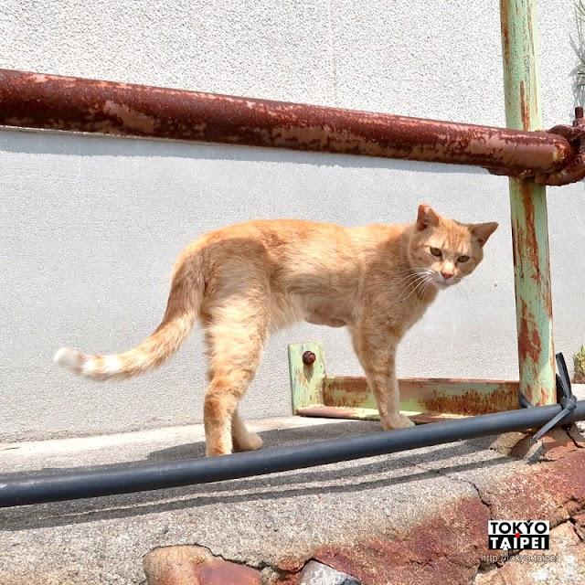 【男木島】港邊慵懶貓咪陪逛 充滿藝術風情的島嶼山城