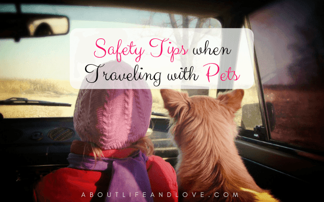 Safety Tips When Traveling With Pets