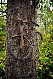bicicleta abandonada en un arbol