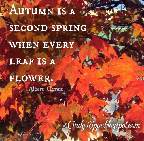 Maple Leaves Fall 2013 by Cindy Rippe, Quote by Albert Camus