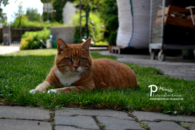 Katze Mimi liegt im Garten