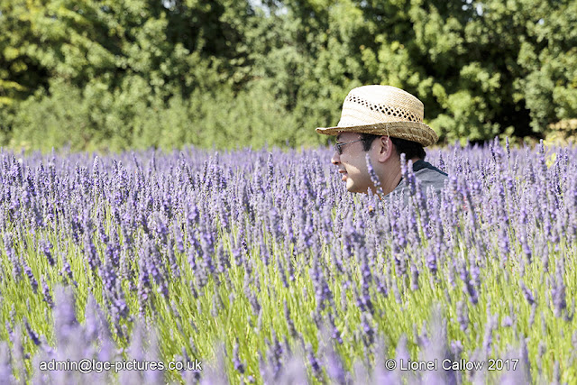 Man in lavender