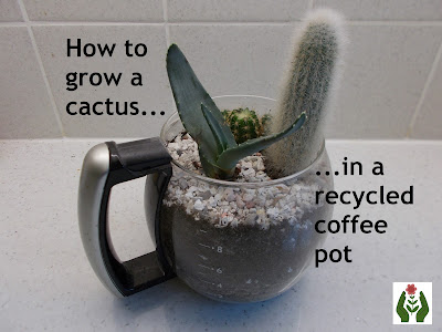 Cactus in a coffee pot Green Fingered Blog