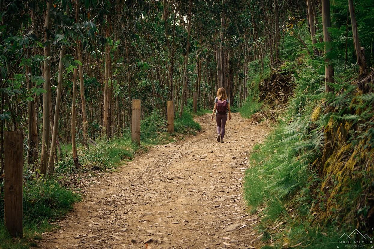 Caminhando entre os eucaliptos nos Passadiços do Paiva