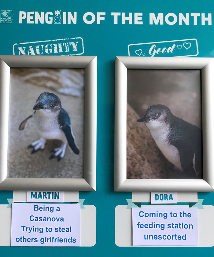 Aquarium Chooses The Naughtiest Penguin Of The Month And Shares Their 'Crime Pictures'